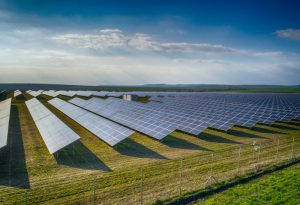 Solar provides clean energy and tree protection