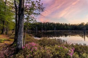 Conservation Fund's Green Bonds Pay Off: Eight Forests And 220,000 Acres