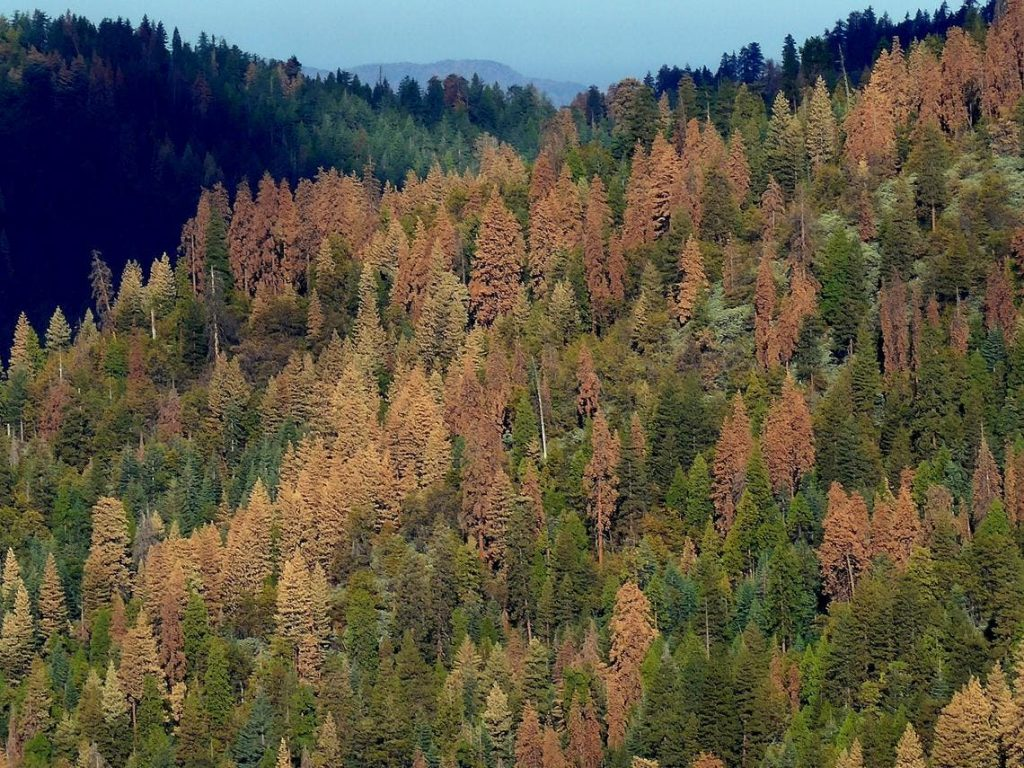 What Would Planting 100 Million Trees Per Week Do In 5, 50, & 500 Years?