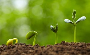 Sustainable investing – Best grown from the ground up?