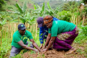 The Role of the Green Climate Fund in Building Capacity and Catalyzing Investment