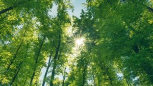 Investing in the Climate-Conscious Green Bond Market